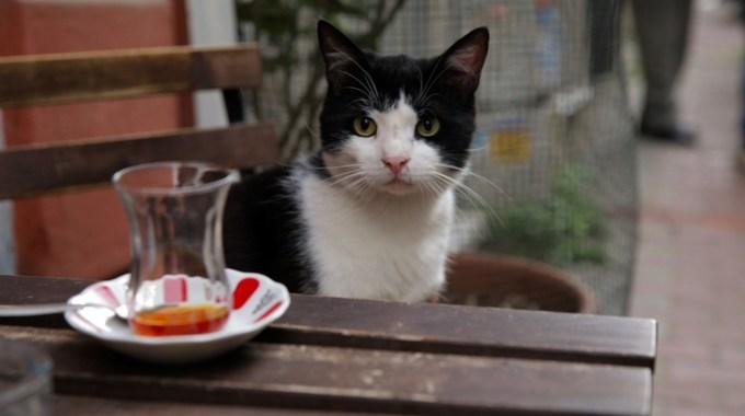 Photo SLIDE pour Kedi - Des chats et des hommes
