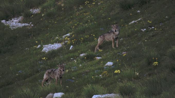 Photo 1 pour La Vallée des loups