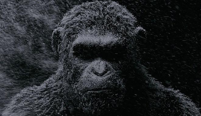 Photo du film La Planète des Singes - Suprématie
