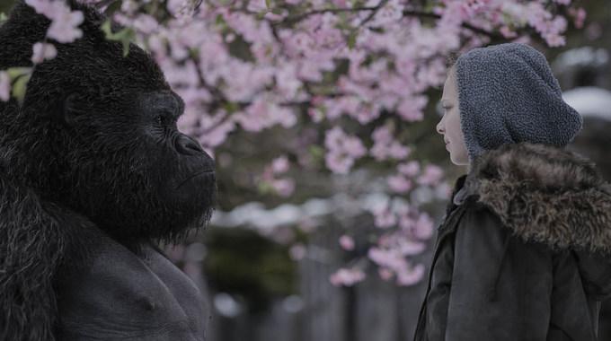 Photo du film La Planète des Singes - Suprématie en 3D