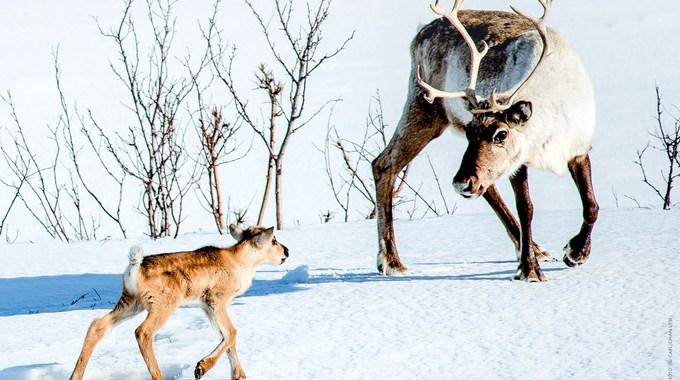 Photo du film Aïlo : une odyssée en Laponie